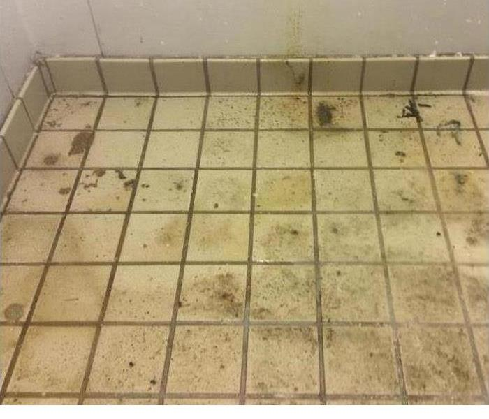 Mold Remediation Can Beloved Possessions Be Restored After Black Mold Damage?