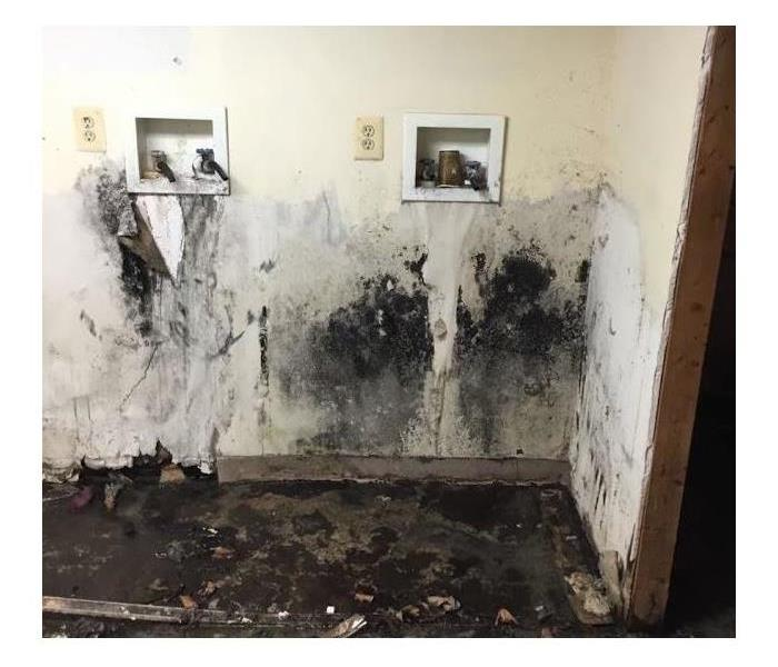 Why SERVPRO Mold Growth in Your Home