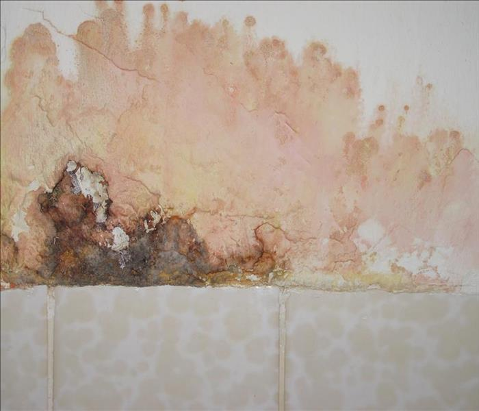 Mold Remediation Mold Damage & Remediation