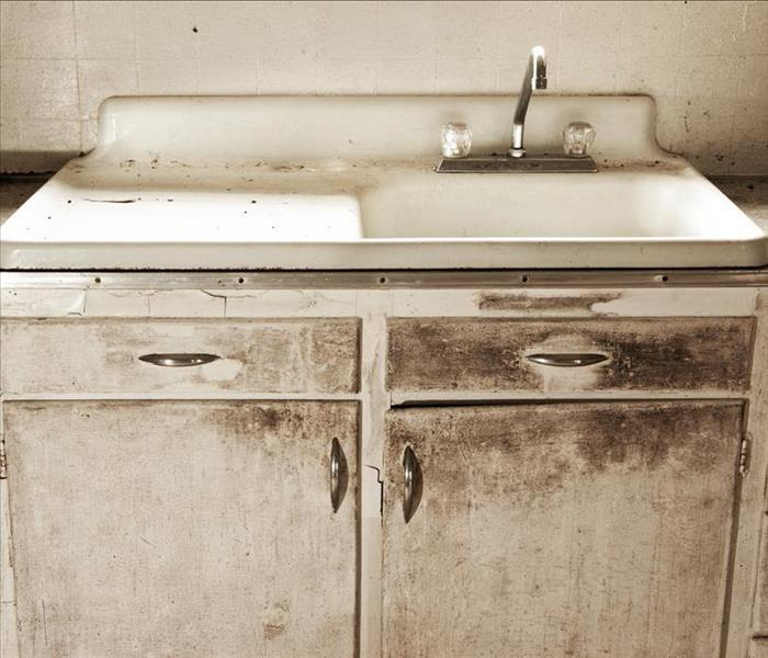 Mold Remediation Mold Growth in Your Edgewood Kitchen